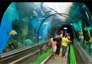 Phuket Aquarium