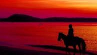 Phuket Horse Riding